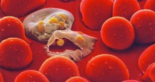 Malaria-Cells
