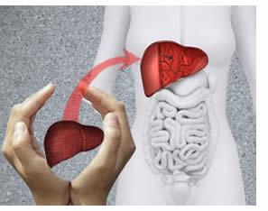 trapianto-di-fegato